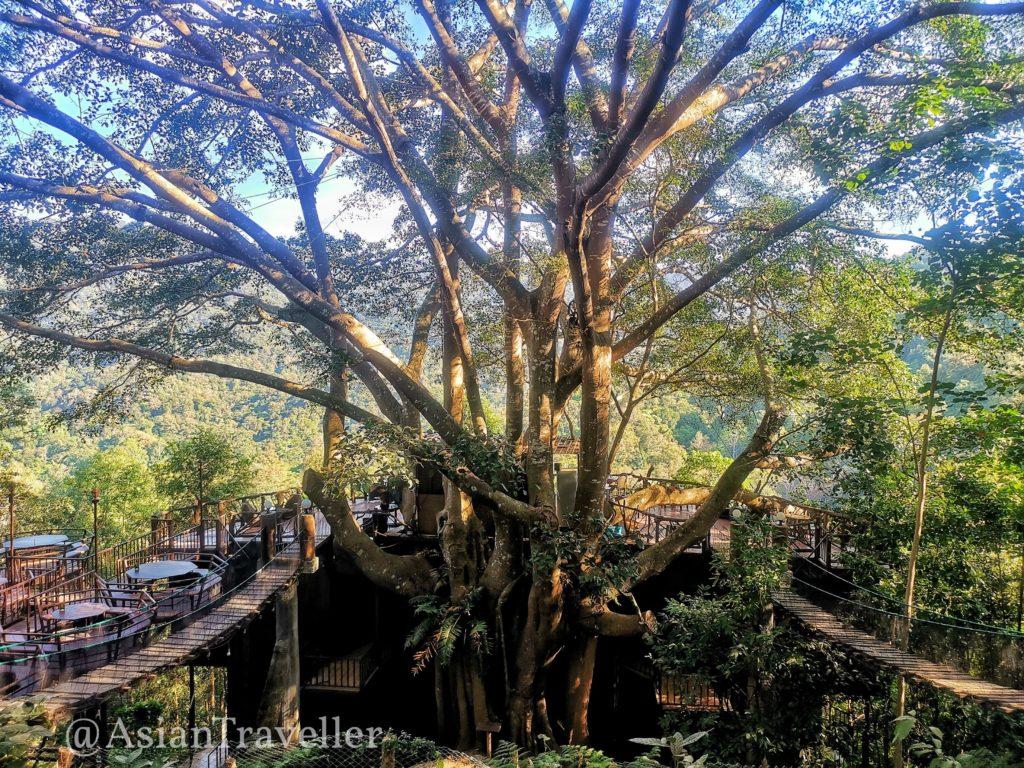 เดอะ ไจแอนท์ เชียงใหม่ / The Giant Chiangmai