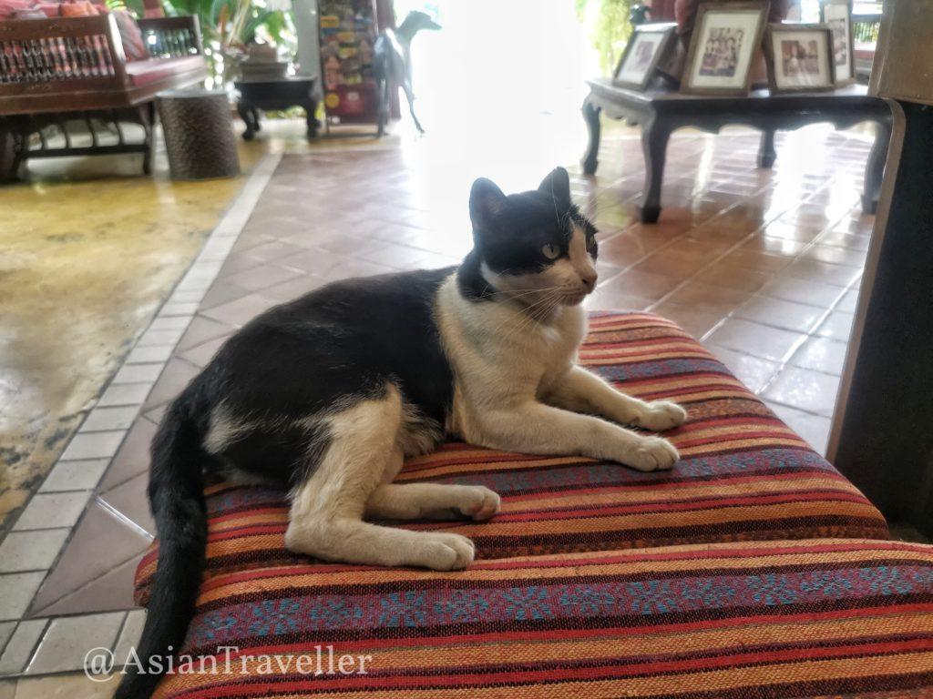 The Opium Chiang mai 猫